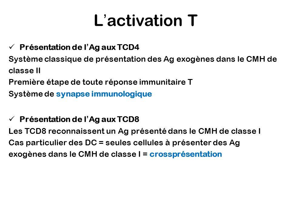 L'activation T Présentation de l'Ag aux TCD4