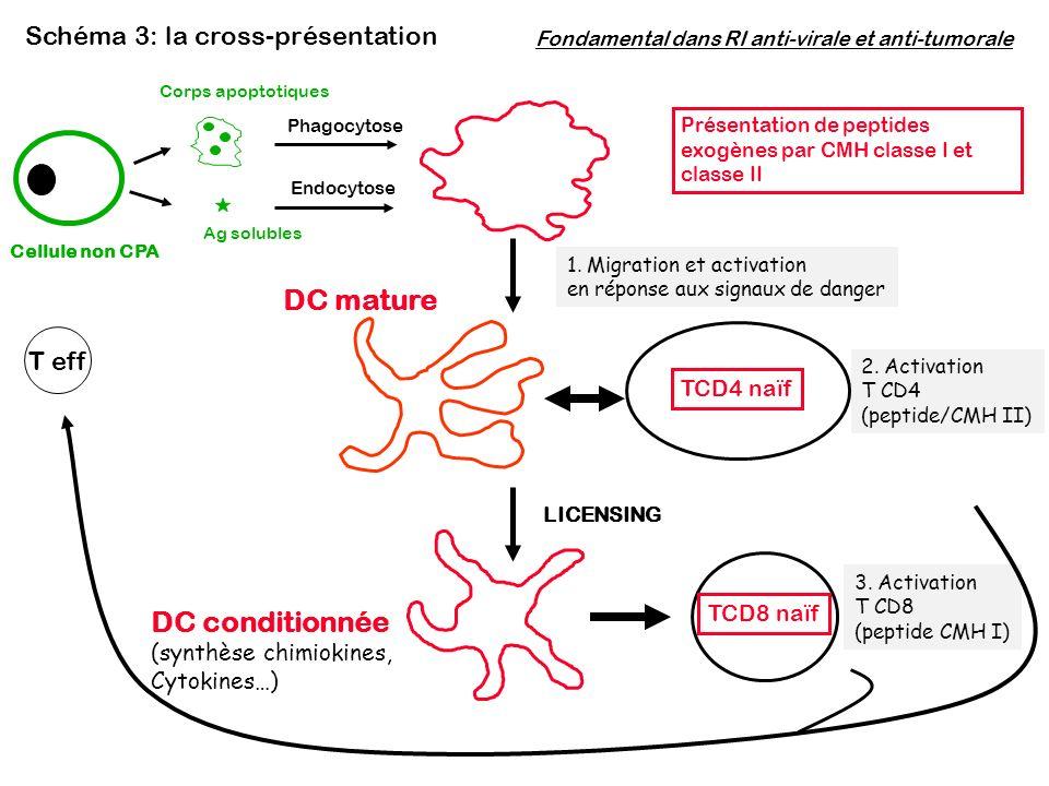 DC mature DC conditionnée Schéma 3: la cross-présentation T eff