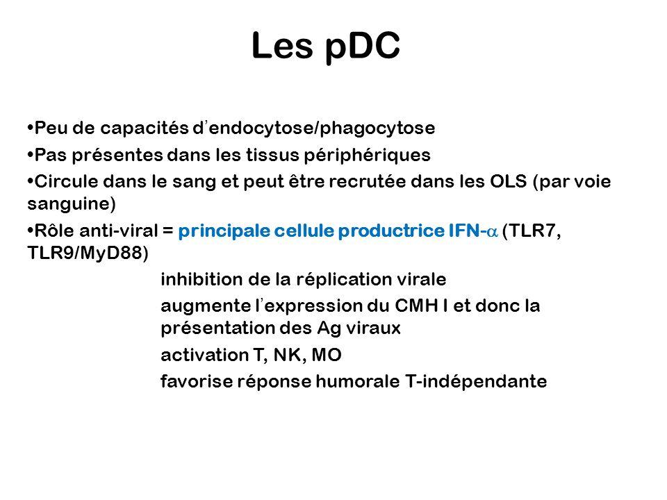 Les pDC Peu de capacités d'endocytose/phagocytose