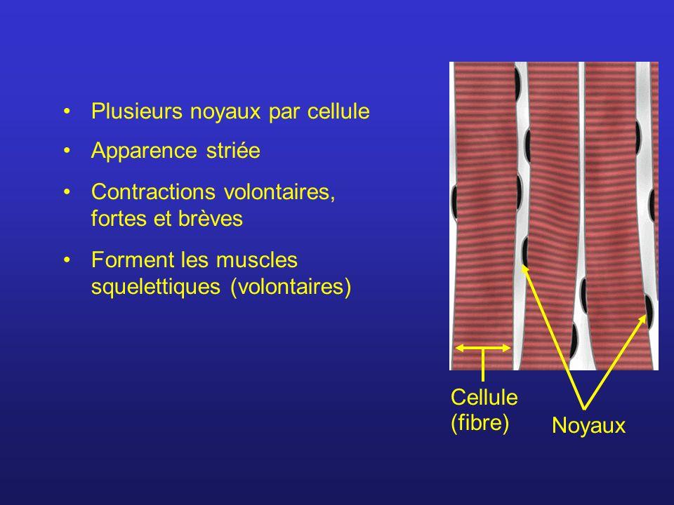 Plusieurs noyaux par cellule