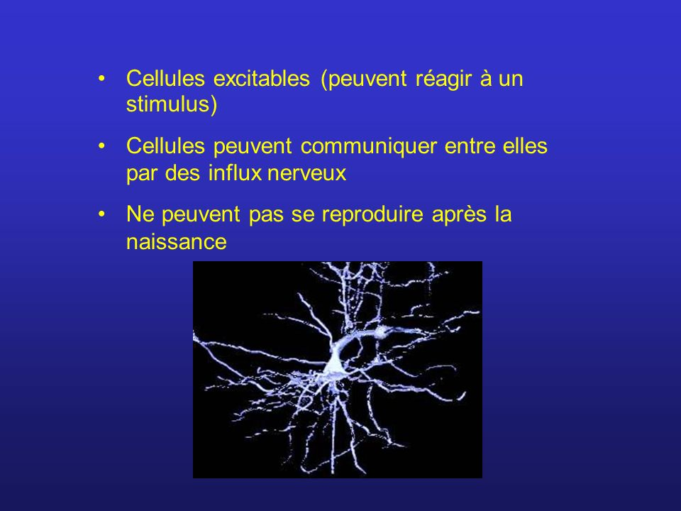 Cellules excitables (peuvent réagir à un stimulus)