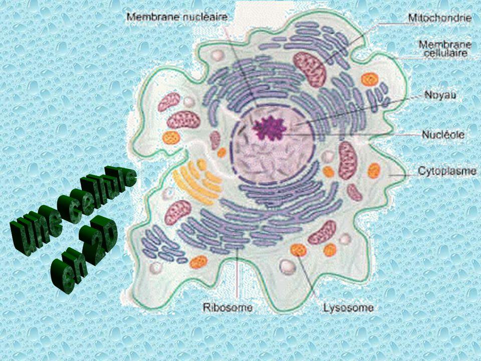 une cellule en 2D