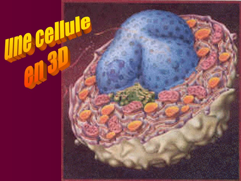 une cellule en 3D