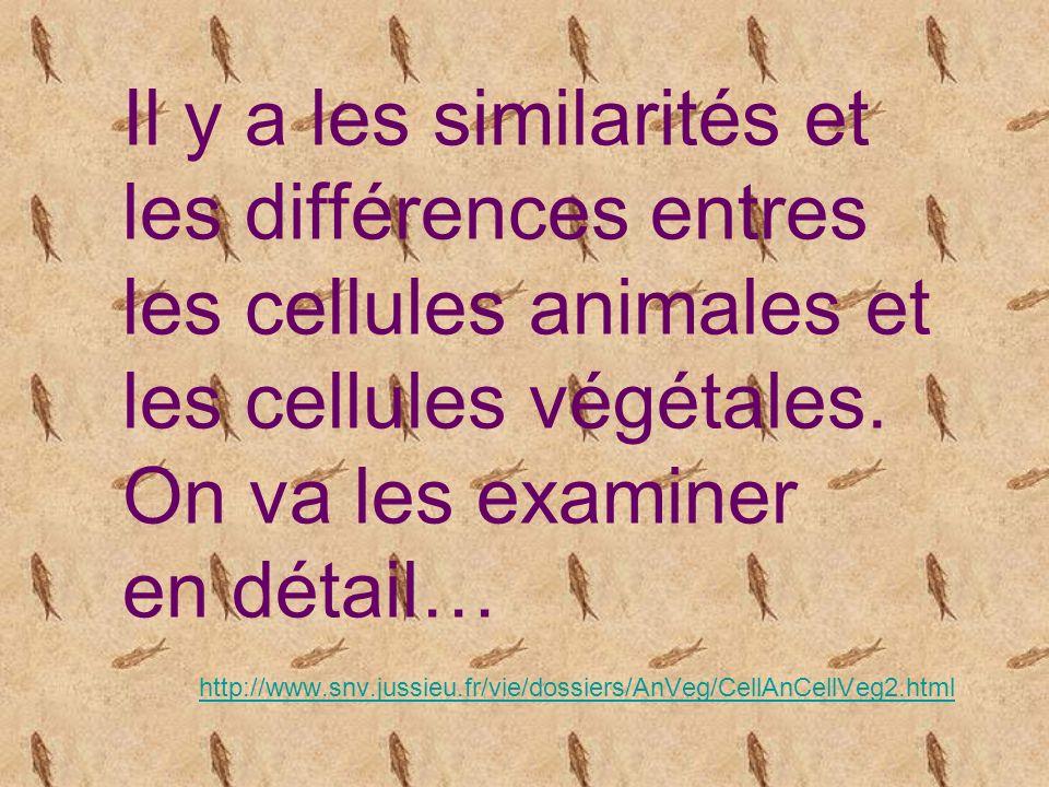 Il y a les similarités et les différences entres