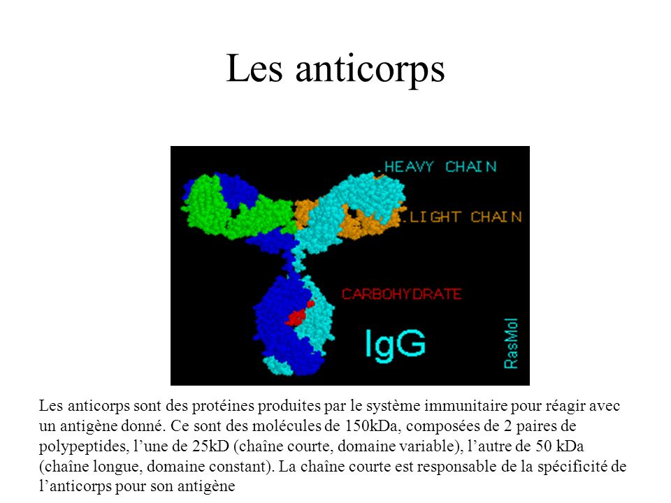 Les anticorps
