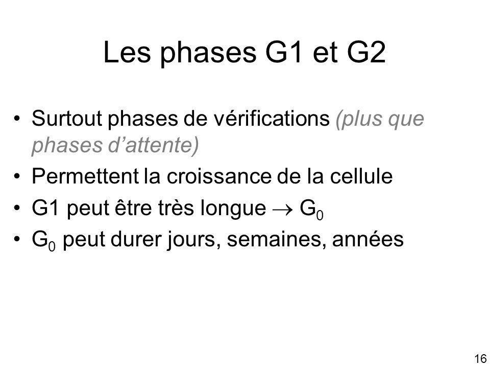 Mardi 22 janvier 2008 Les phases G1 et G2. Surtout phases de vérifications (plus que phases d'attente)