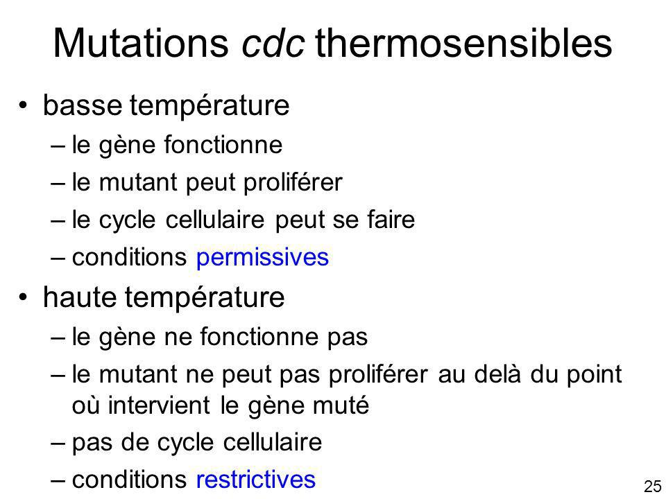 Mutations cdc thermosensibles