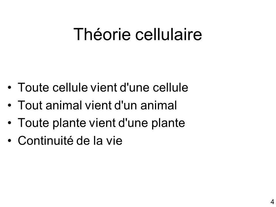 Théorie cellulaire Toute cellule vient d une cellule
