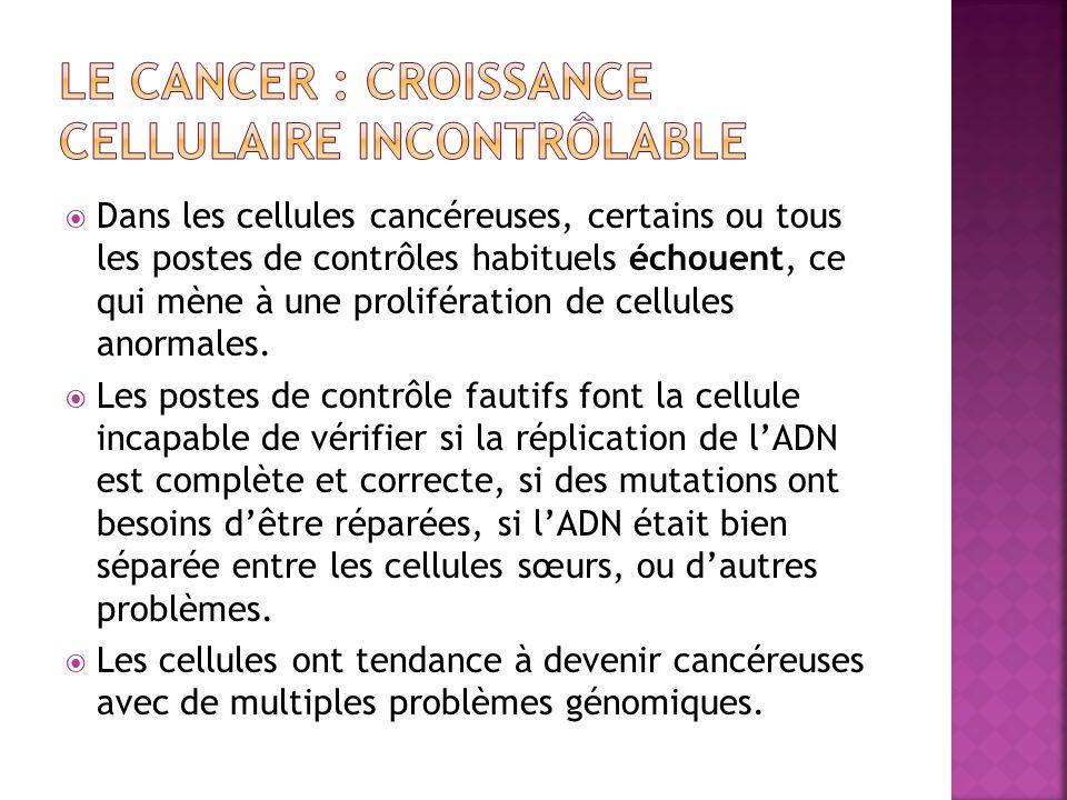Le cancer : croissance cellulaire incontrôlable