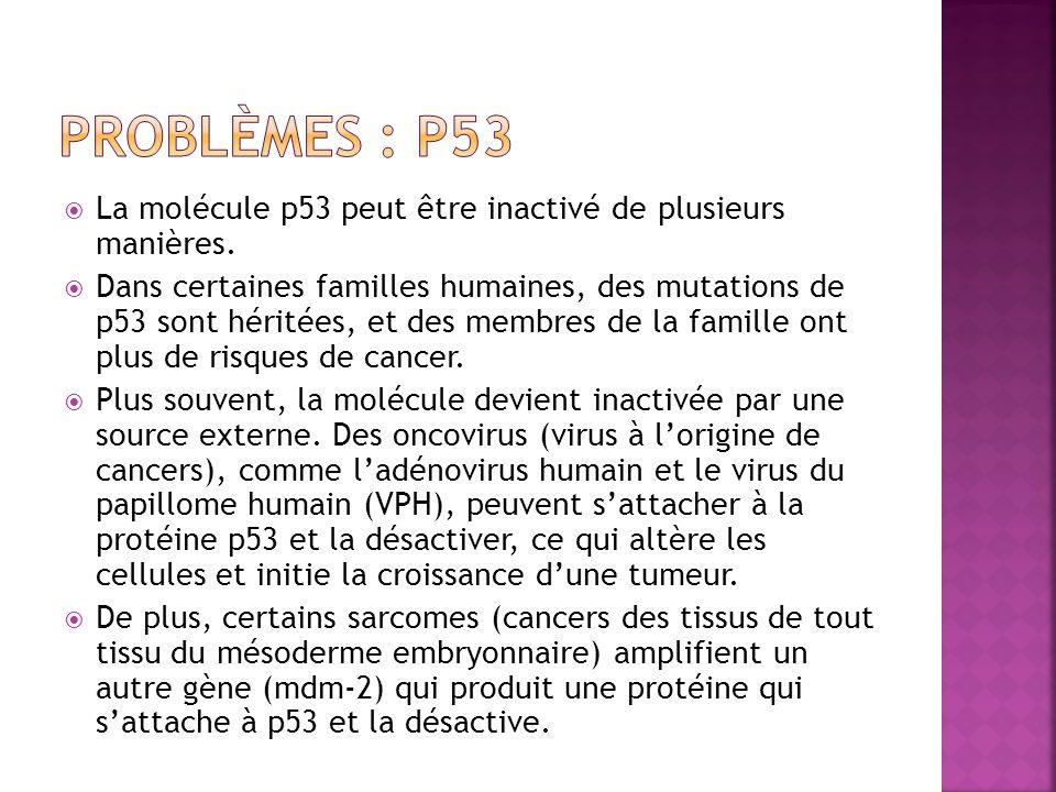 Problèmes : P53 La molécule p53 peut être inactivé de plusieurs manières.