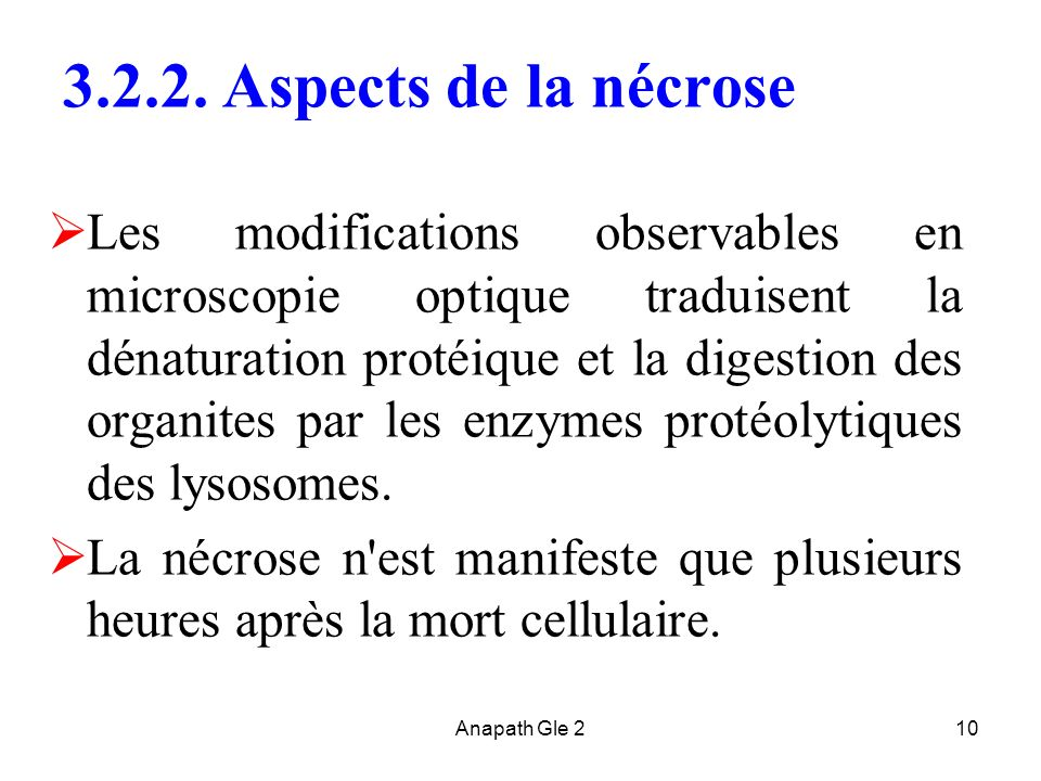 3.2.2. Aspects de la nécrose