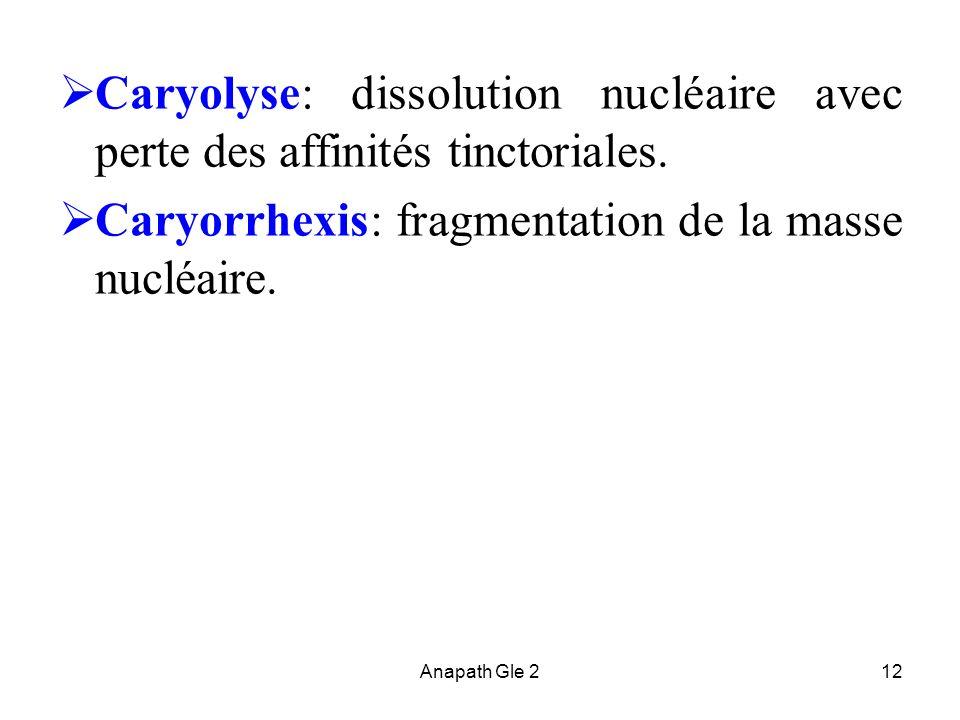 Caryorrhexis: fragmentation de la masse nucléaire.