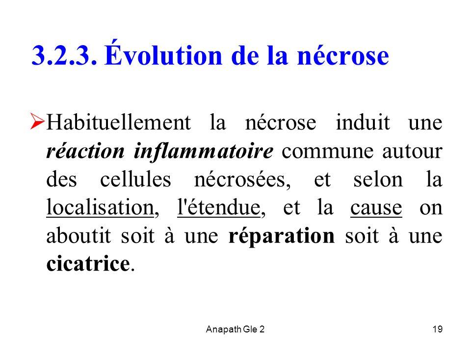 3.2.3. Évolution de la nécrose
