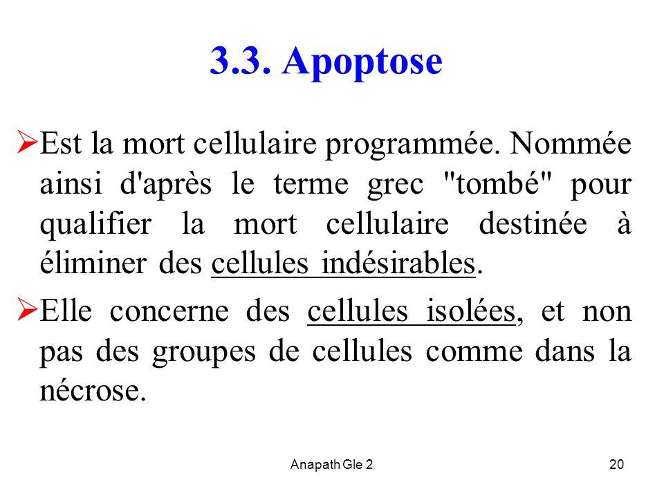 3.3. Apoptose