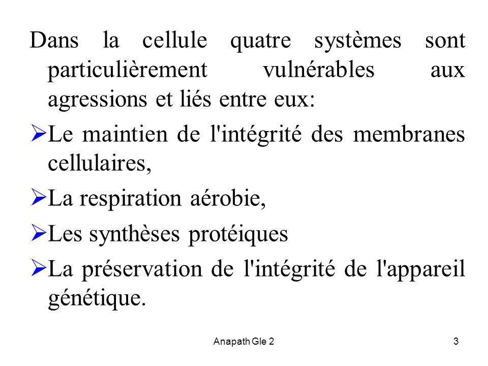 Le maintien de l intégrité des membranes cellulaires,