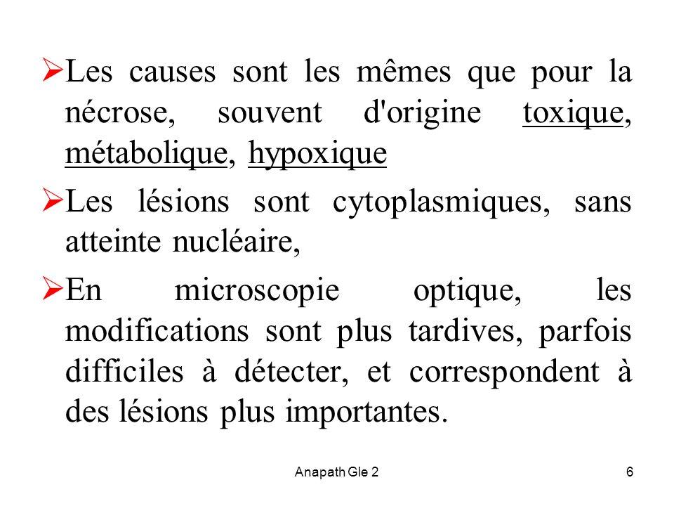 Les lésions sont cytoplasmiques, sans atteinte nucléaire,