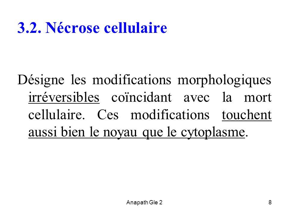 3.2. Nécrose cellulaire