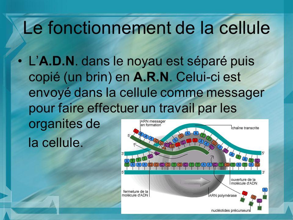 Le fonctionnement de la cellule