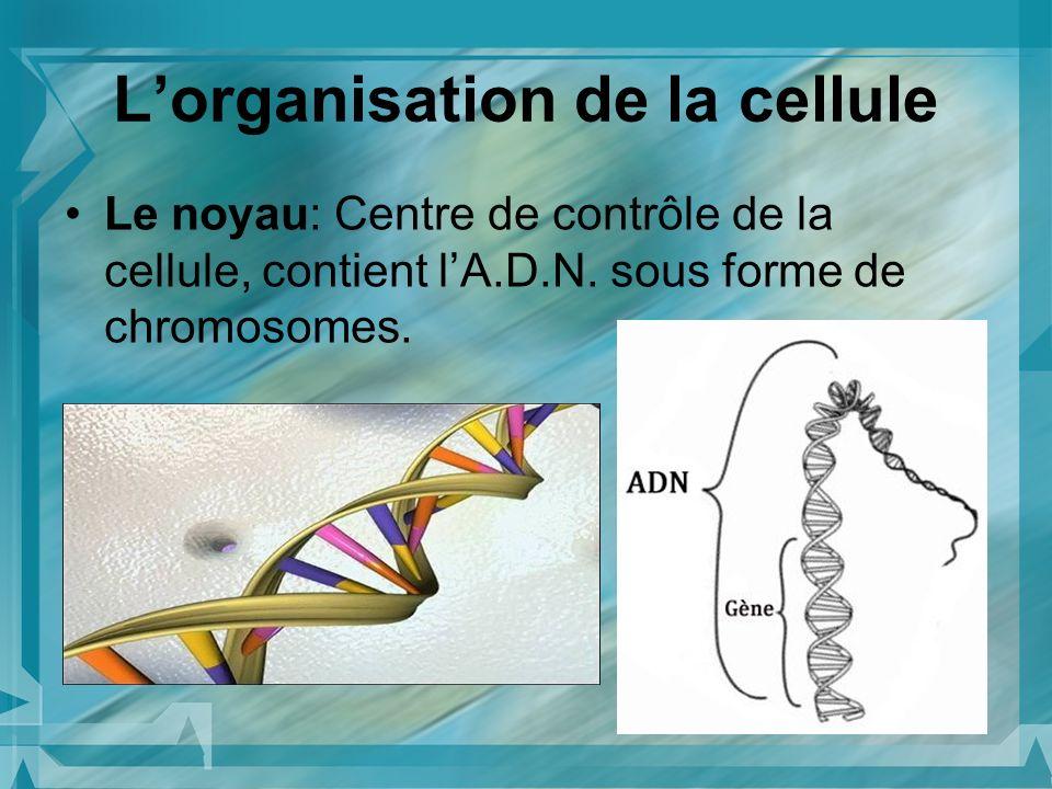 L'organisation de la cellule
