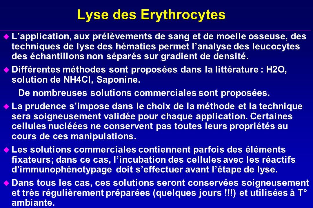 Lyse des Erythrocytes