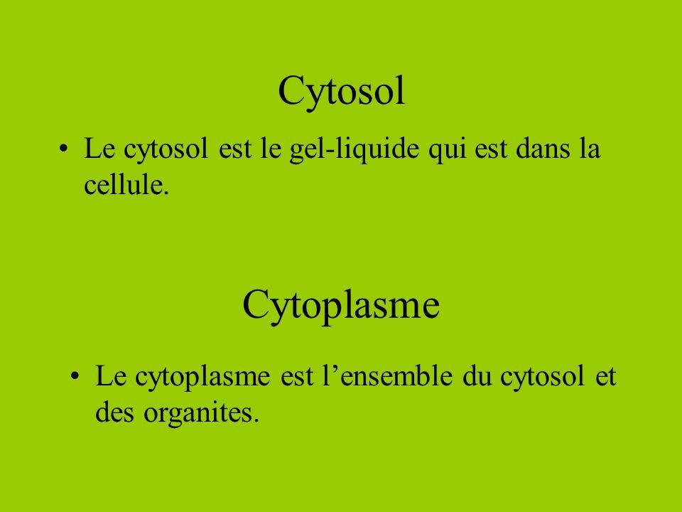 Cytosol Le cytosol est le gel-liquide qui est dans la cellule.