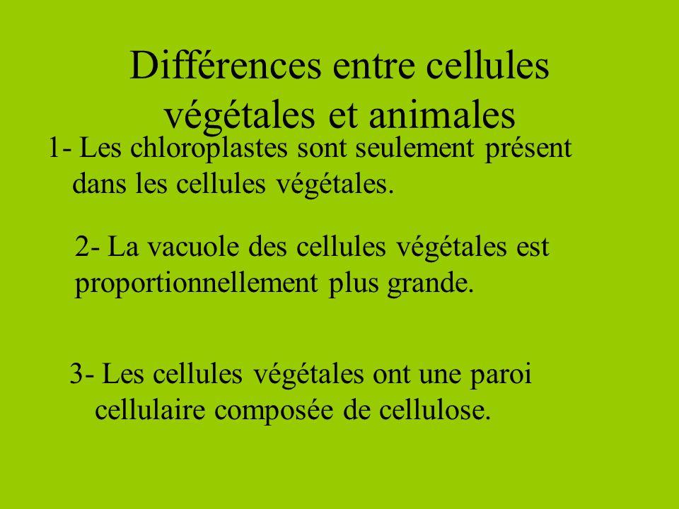 Différences entre cellules végétales et animales