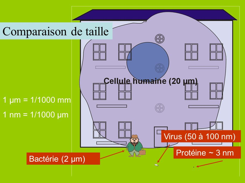Comparaison de taille 1 µm = 1/1000 mm 1 nm = 1/1000 µm