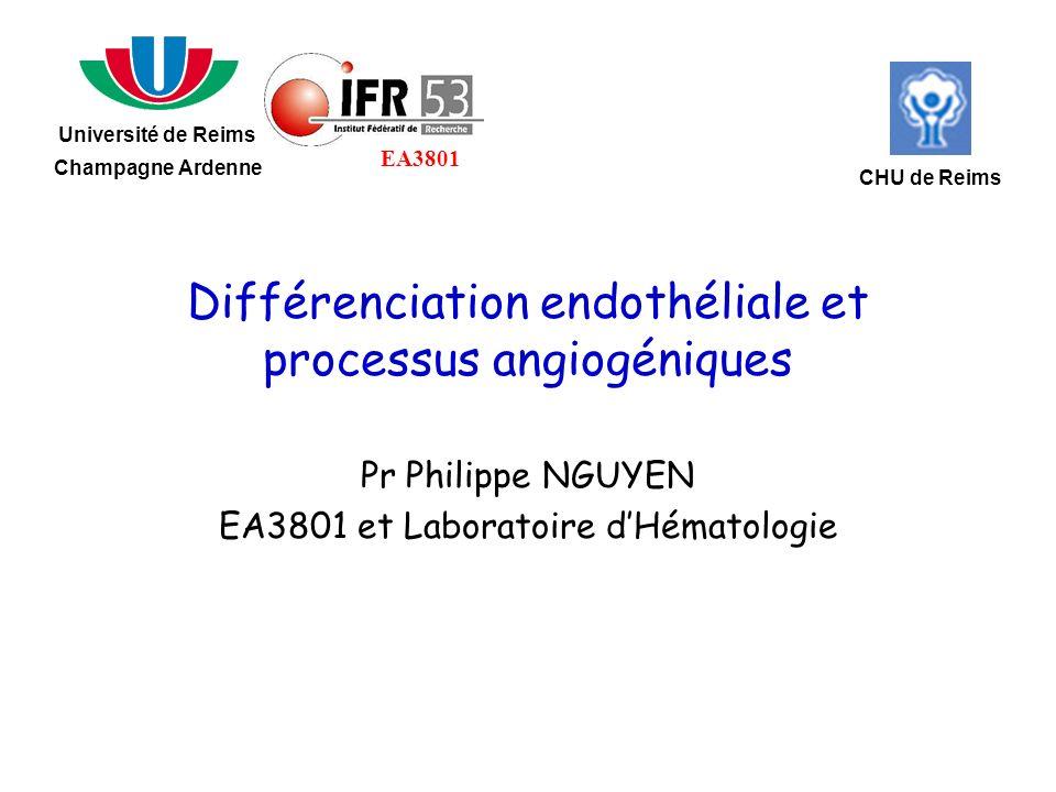 Différenciation endothéliale et processus angiogéniques
