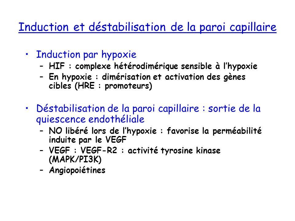 Induction et déstabilisation de la paroi capillaire