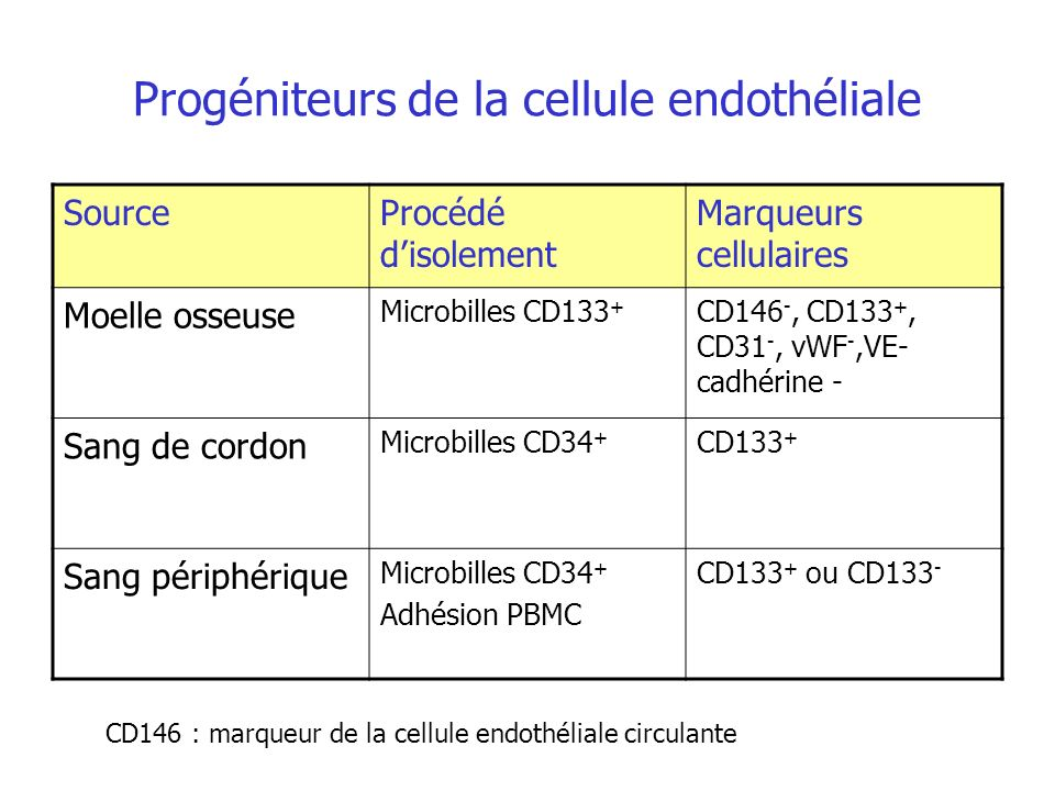 Progéniteurs de la cellule endothéliale