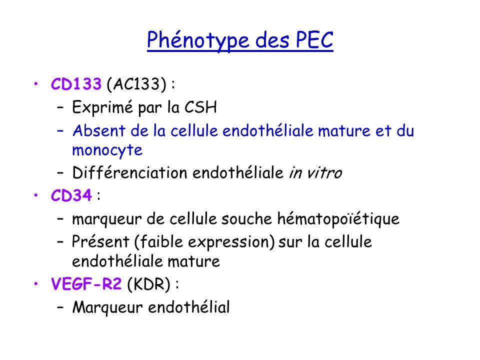 Phénotype des PEC CD133 (AC133) : Exprimé par la CSH