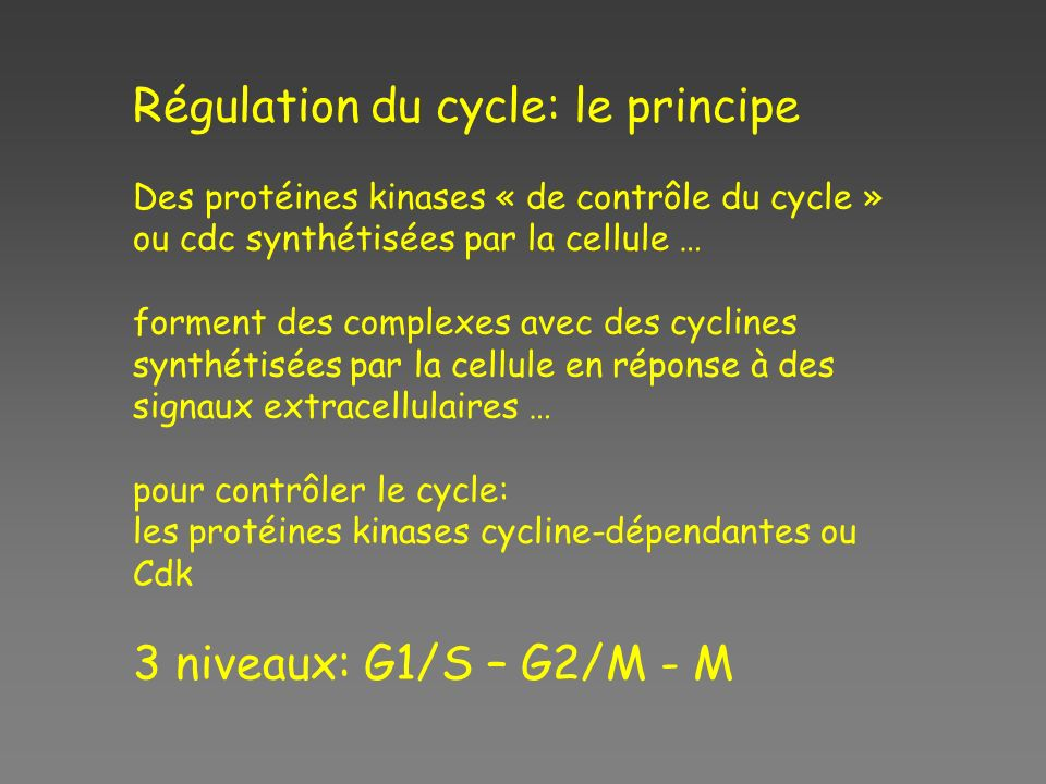 Régulation du cycle: le principe