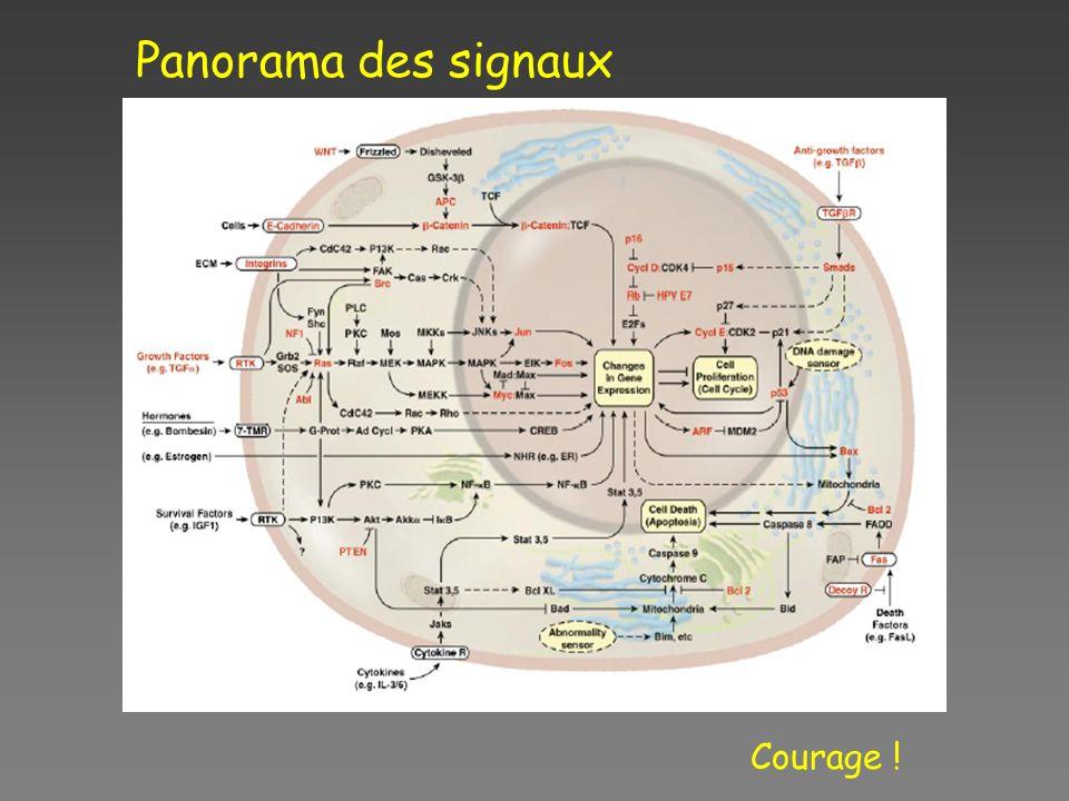 Panorama des signaux Courage !