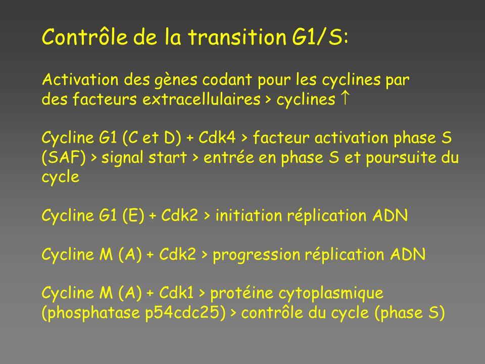 Contrôle de la transition G1/S: