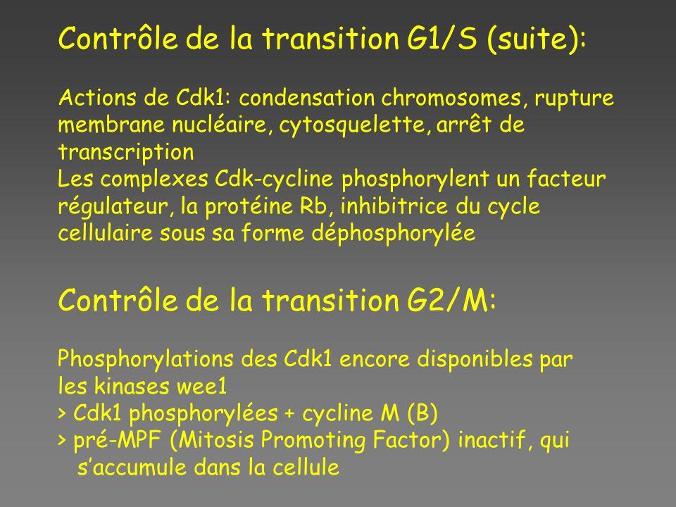 Contrôle de la transition G1/S (suite):