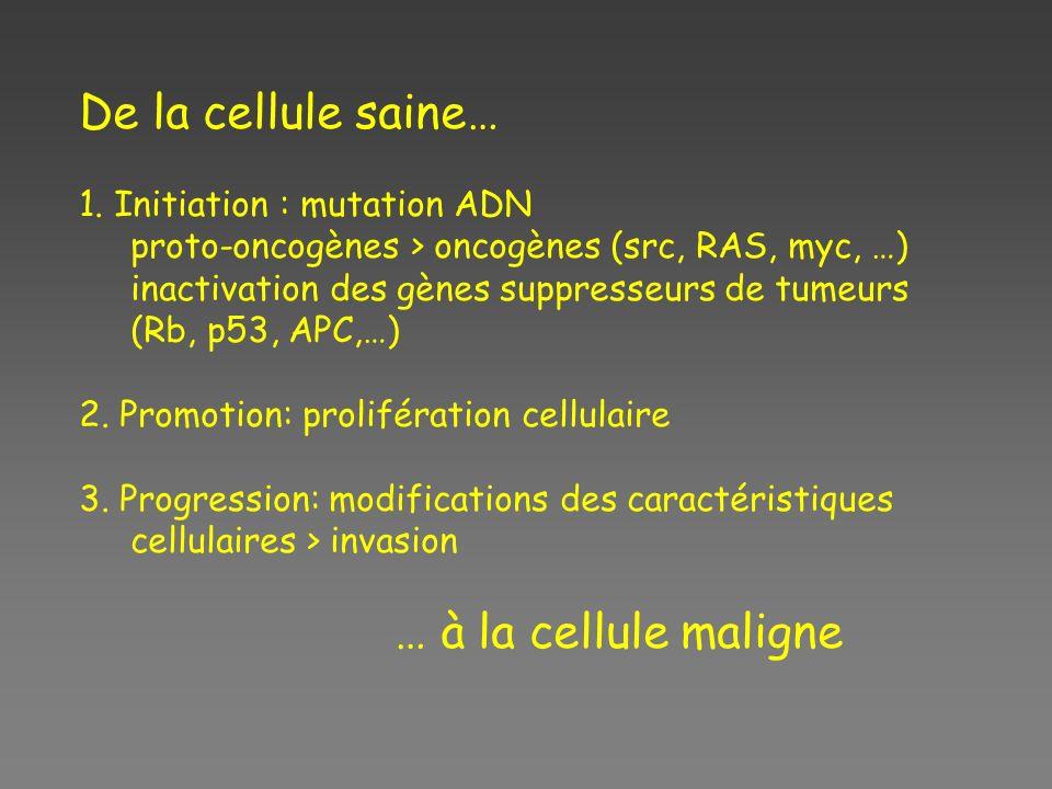 De la cellule saine… … à la cellule maligne