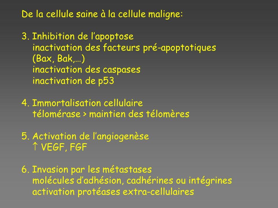 De la cellule saine à la cellule maligne: