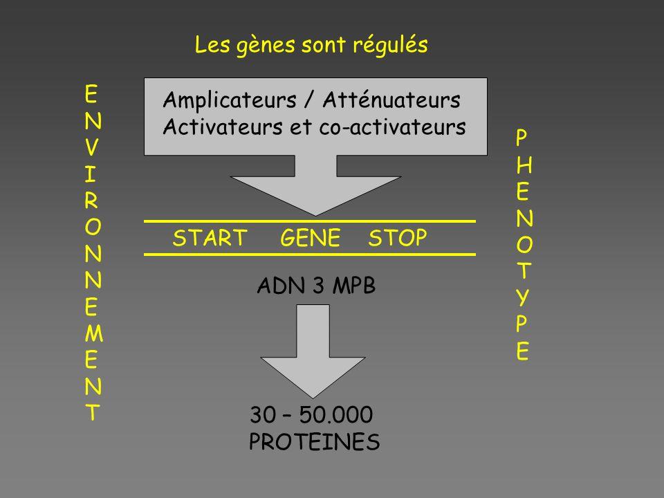 Les gènes sont régulés ENVIRONNEMENT. Amplicateurs / Atténuateurs. Activateurs et co-activateurs.