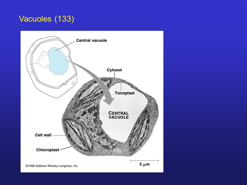 Vacuoles (133)