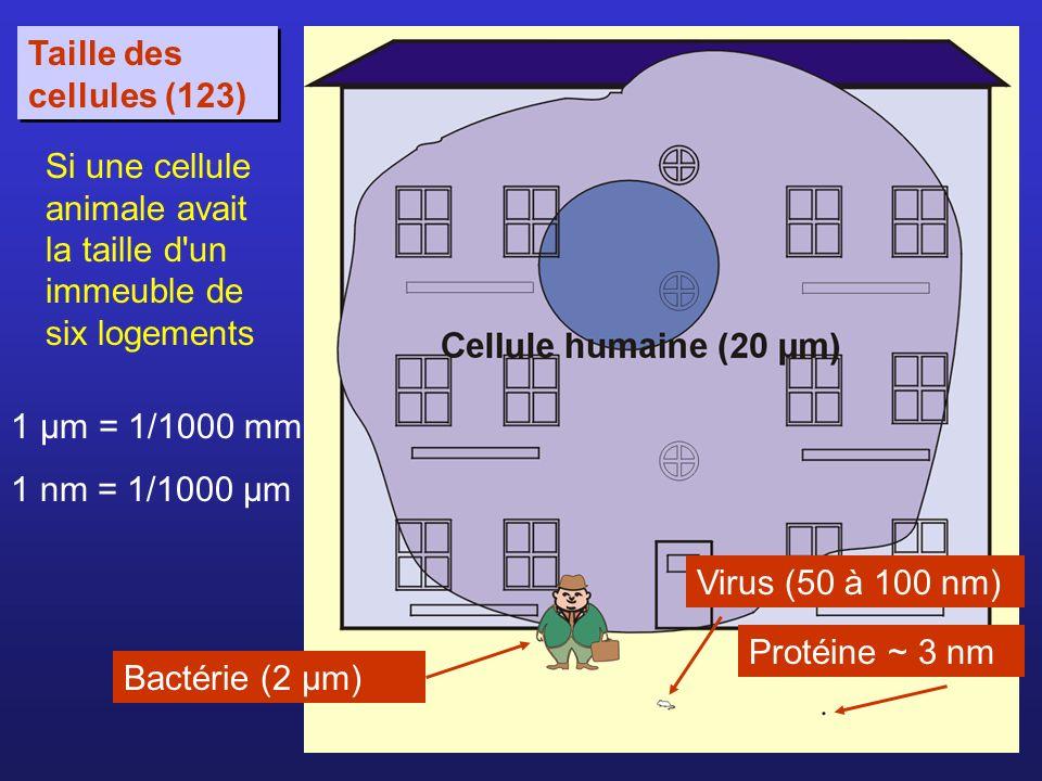 Taille des cellules (123) Si une cellule animale avait la taille d un immeuble de six logements. 1 µm = 1/1000 mm.