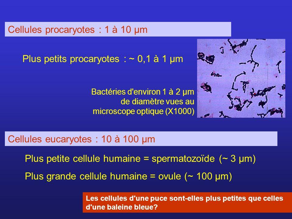 Cellules procaryotes : 1 à 10 µm