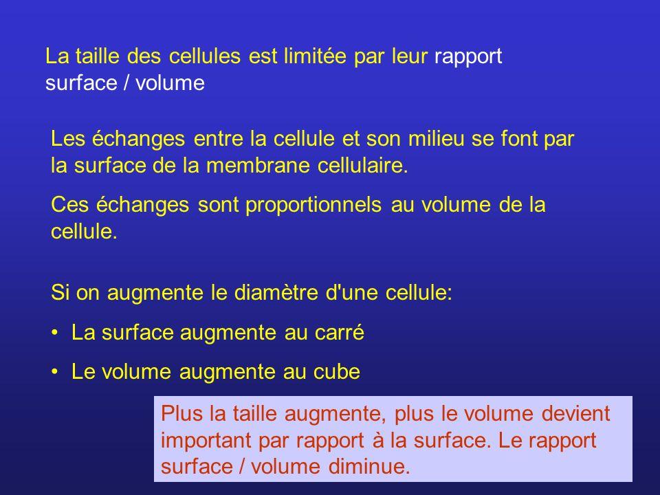 La taille des cellules est limitée par leur rapport surface / volume