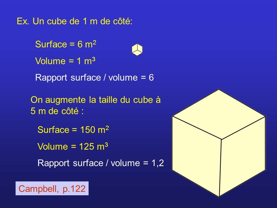 Ex. Un cube de 1 m de côté: Surface = 6 m2. Volume = 1 m3. Rapport surface / volume = 6. On augmente la taille du cube à 5 m de côté :