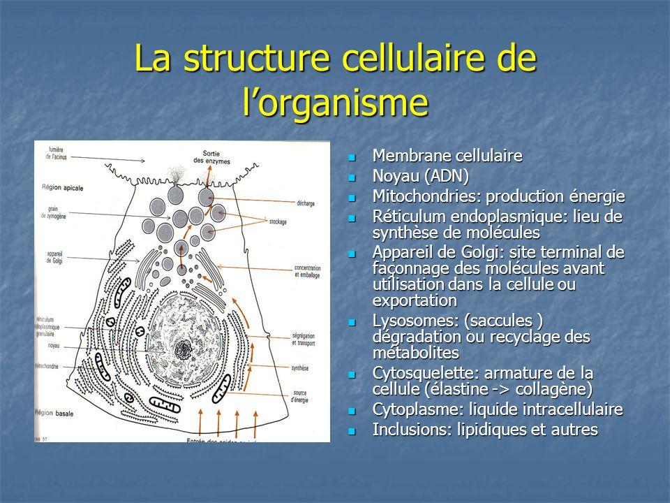 La structure cellulaire de l'organisme