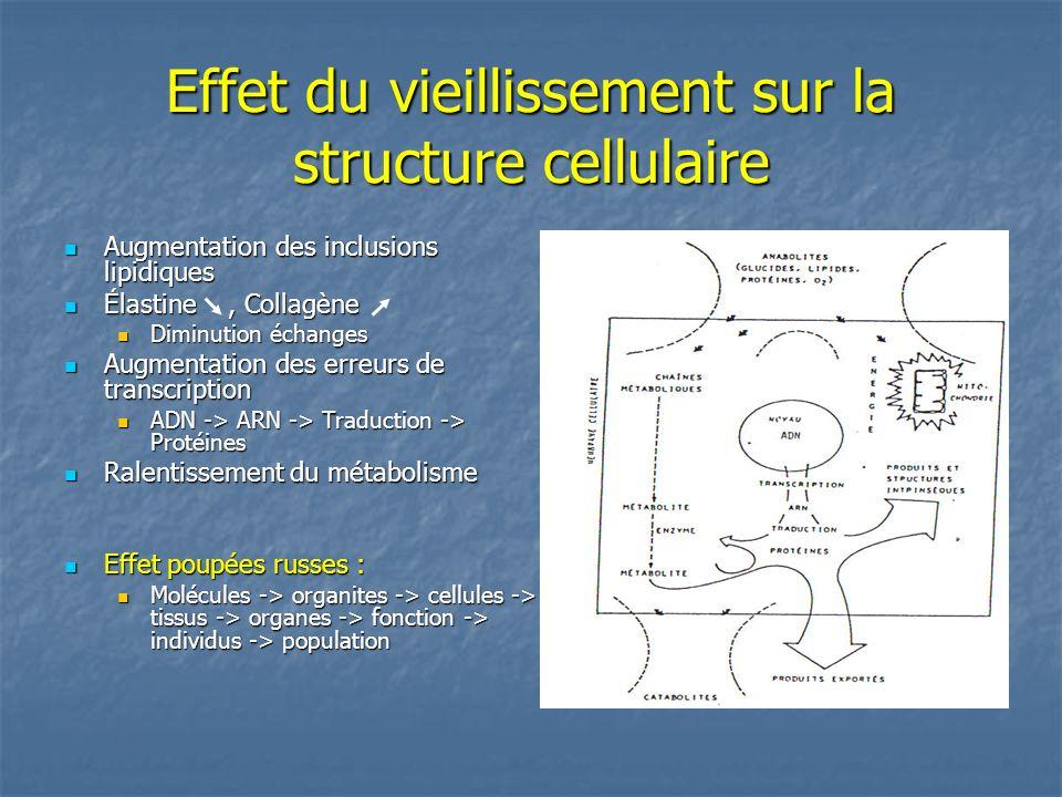 Effet du vieillissement sur la structure cellulaire