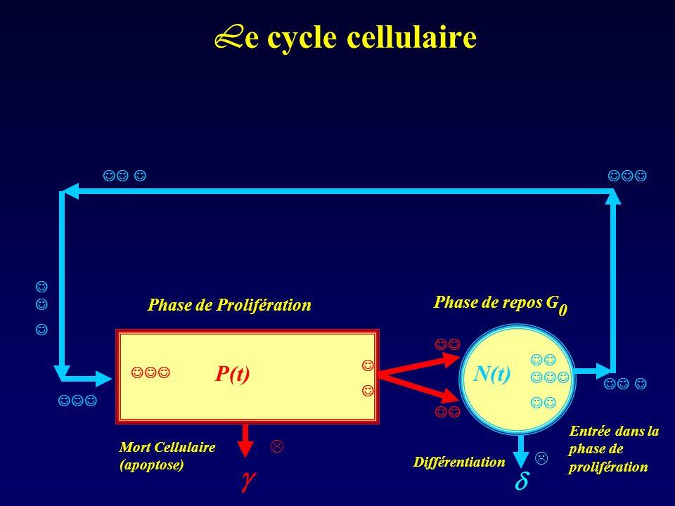 Le cycle cellulaire P(t) N(t)  Phase de repos G0
