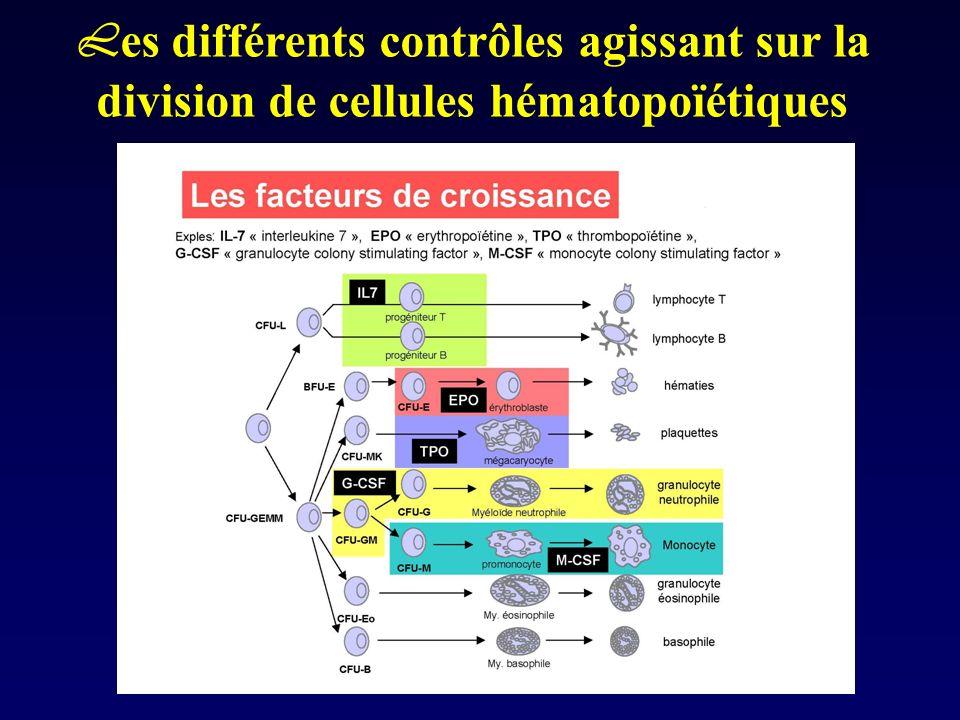 Les différents contrôles agissant sur la division de cellules hématopoïétiques