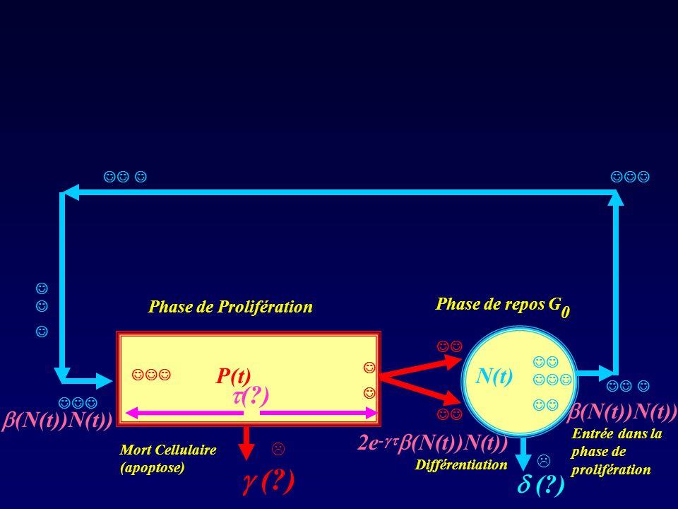 ( ) P(t) N(t)  ( ) Phase de repos G0 Phase de Prolifération  ( )