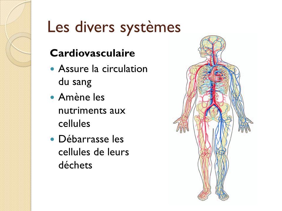 Les divers systèmes Cardiovasculaire Assure la circulation du sang