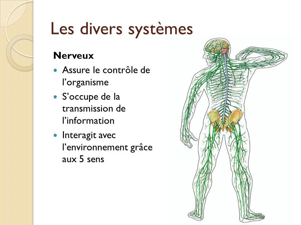 Les divers systèmes Nerveux Assure le contrôle de l'organisme
